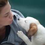 online pet adoption by a responsible pet parent