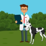 online vet appointment and online consultation